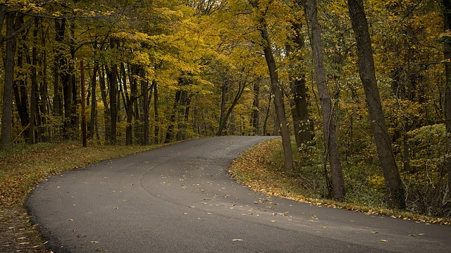 A forest road with Autumn colours of yellow and brown.